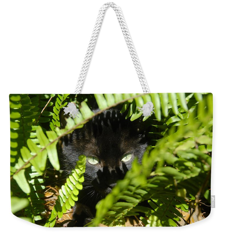 Cat Weekender Tote Bag featuring the photograph Blackie In The Ferns by David Lee Thompson