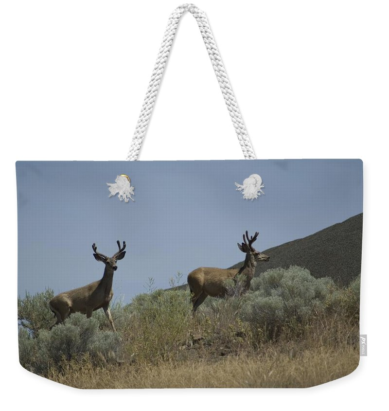 Buck Weekender Tote Bag featuring the photograph Blacktail Deer 3 by Sara Stevenson