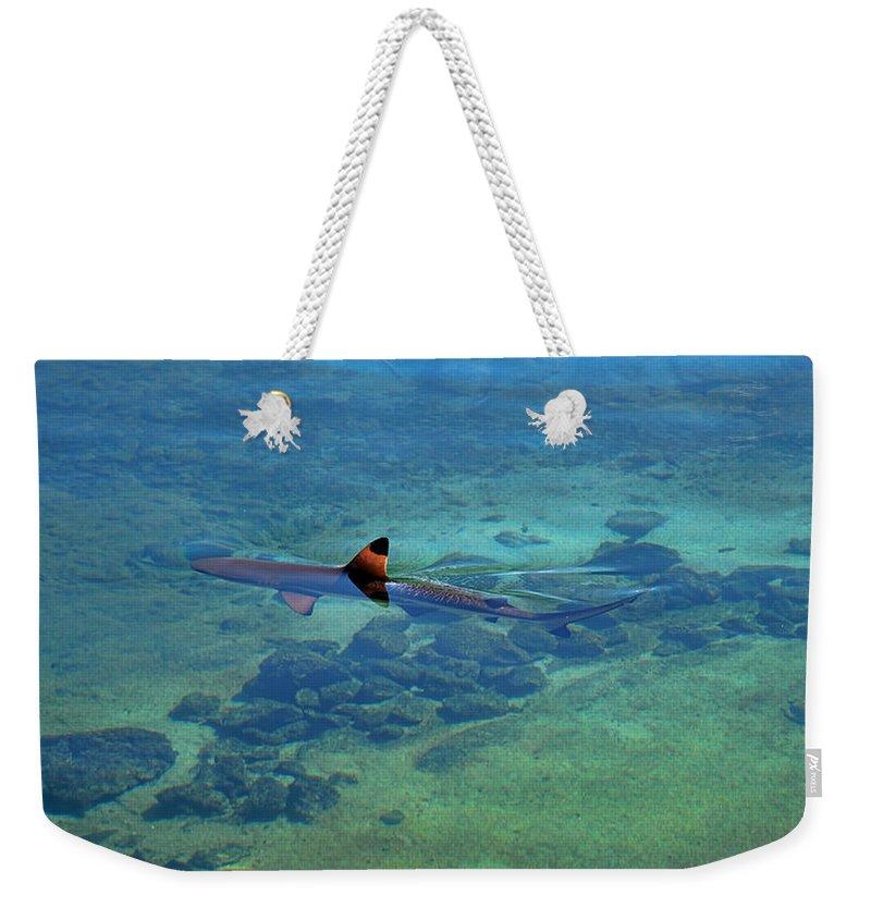 Pamela Walton Weekender Tote Bag featuring the photograph Blacktip Reef Shark by Pamela Walton