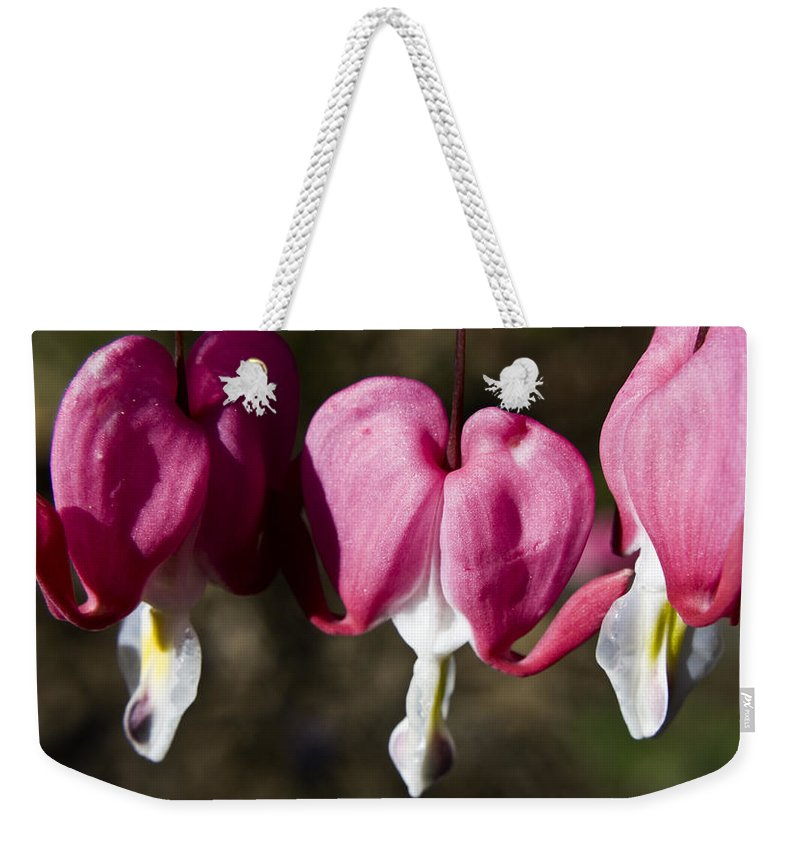 Bleeding Weekender Tote Bag featuring the photograph Bleeding Heart by Teresa Mucha