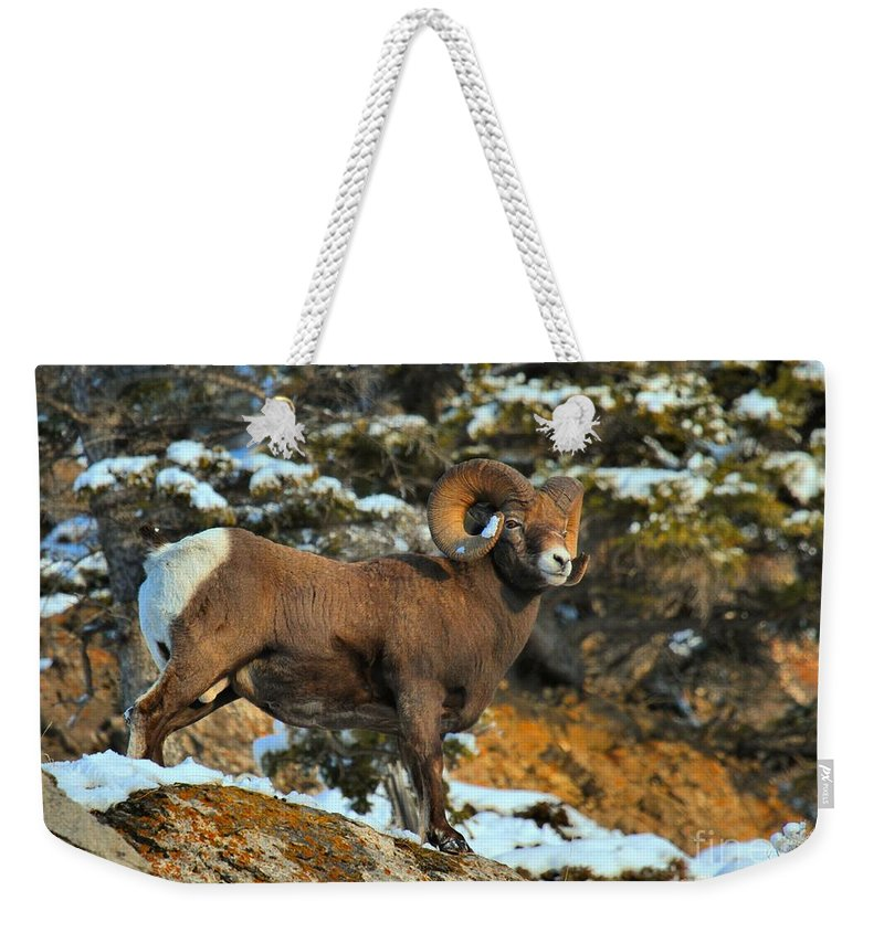 Jasper Bighorn Weekender Tote Bag featuring the photograph Blending In In Jasper by Adam Jewell