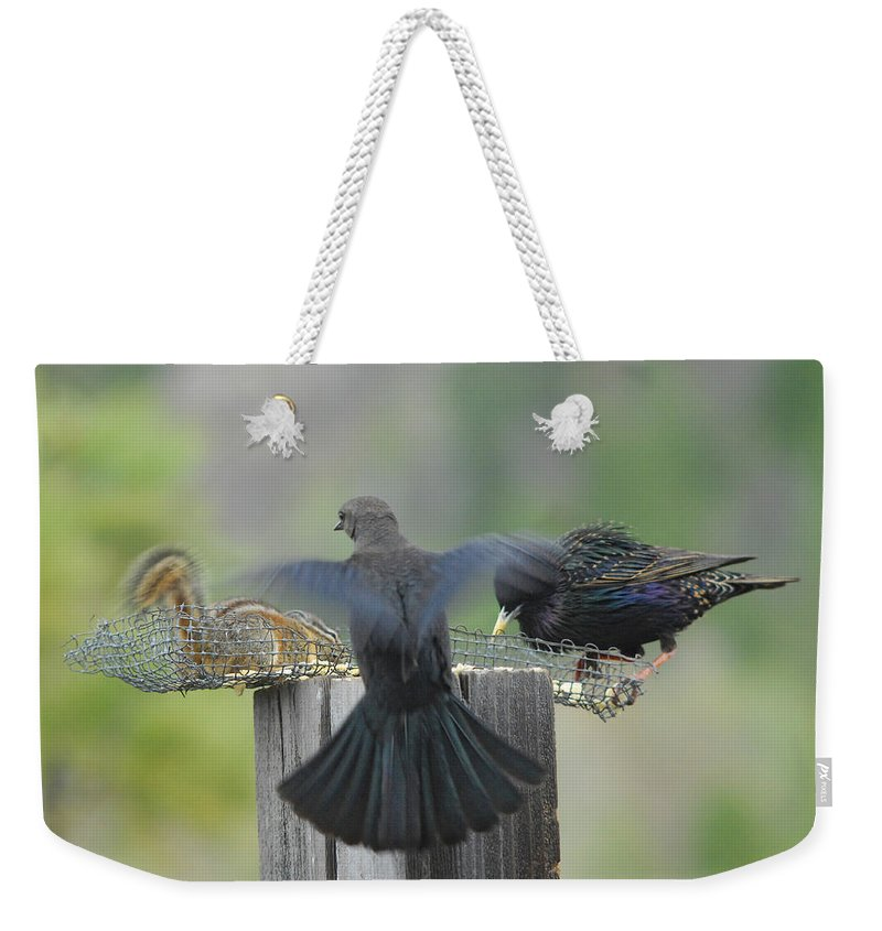 Bird Weekender Tote Bag featuring the photograph Bless This Meal by Donna Blackhall
