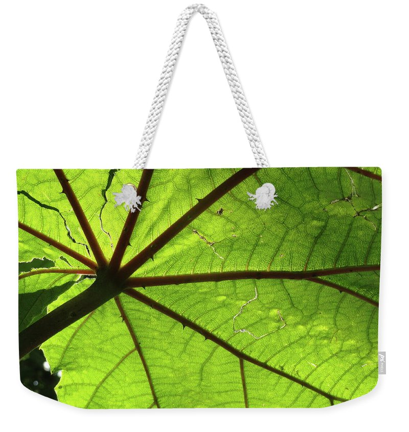 Leaves Weekender Tote Bag featuring the photograph Blood Red Feeder by Trish Hale