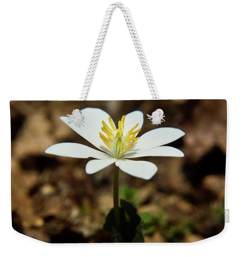 Sanguinaria Weekender Tote Bag featuring the photograph Bloodroot by Douglas Barnett