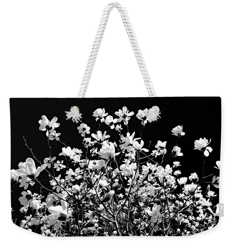 Magnolia Weekender Tote Bag featuring the photograph Blooming Magnolia Tree by Elena Elisseeva
