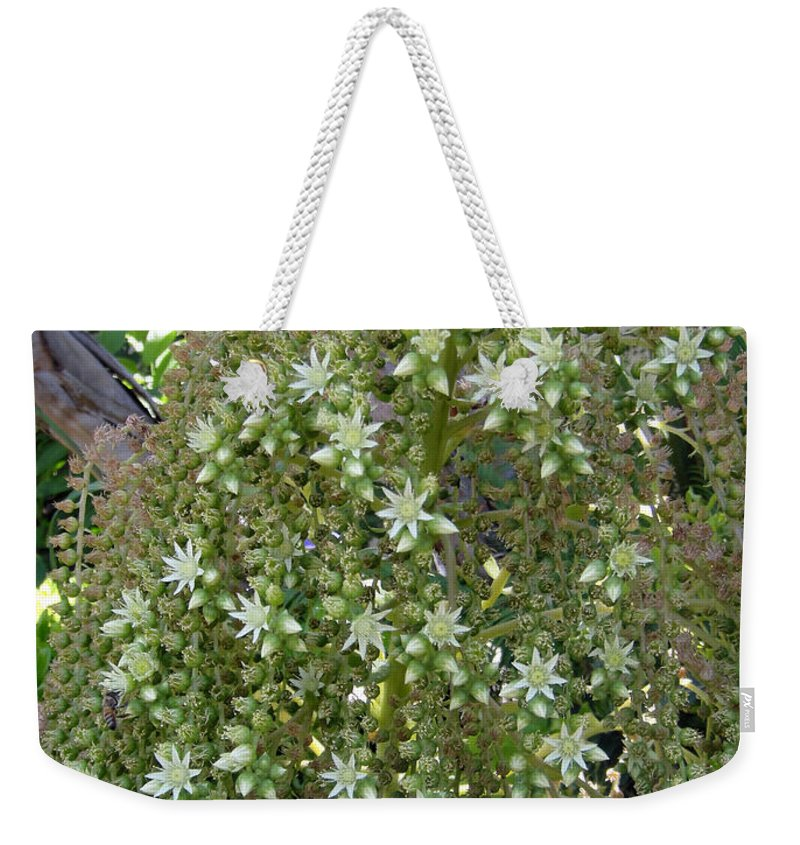 Bloom Weekender Tote Bag featuring the photograph Blooming Succulent Plant. Big And Beautiful by Sofia Metal Queen