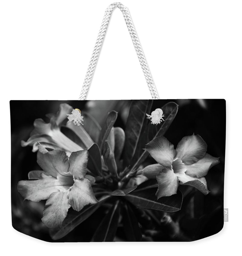 Mati Weekender Tote Bag featuring the photograph Bloomisted by Jez C Self