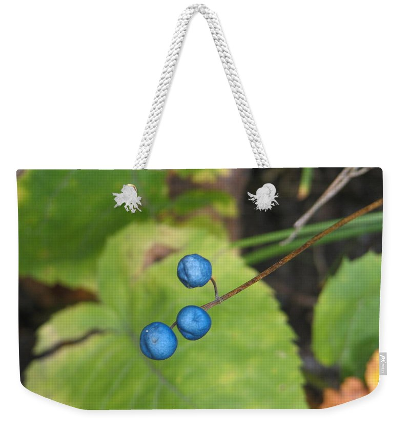 Blue Weekender Tote Bag featuring the photograph Blue Berries by Kelly Mezzapelle