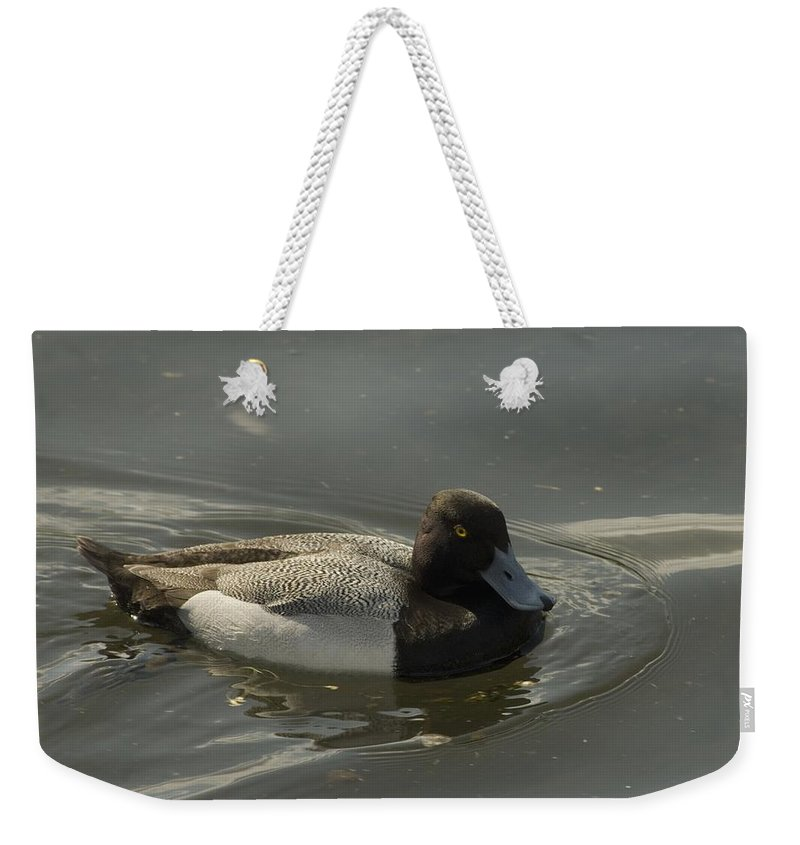 Diver Ducks Weekender Tote Bag featuring the photograph Blue Bill by Sara Stevenson