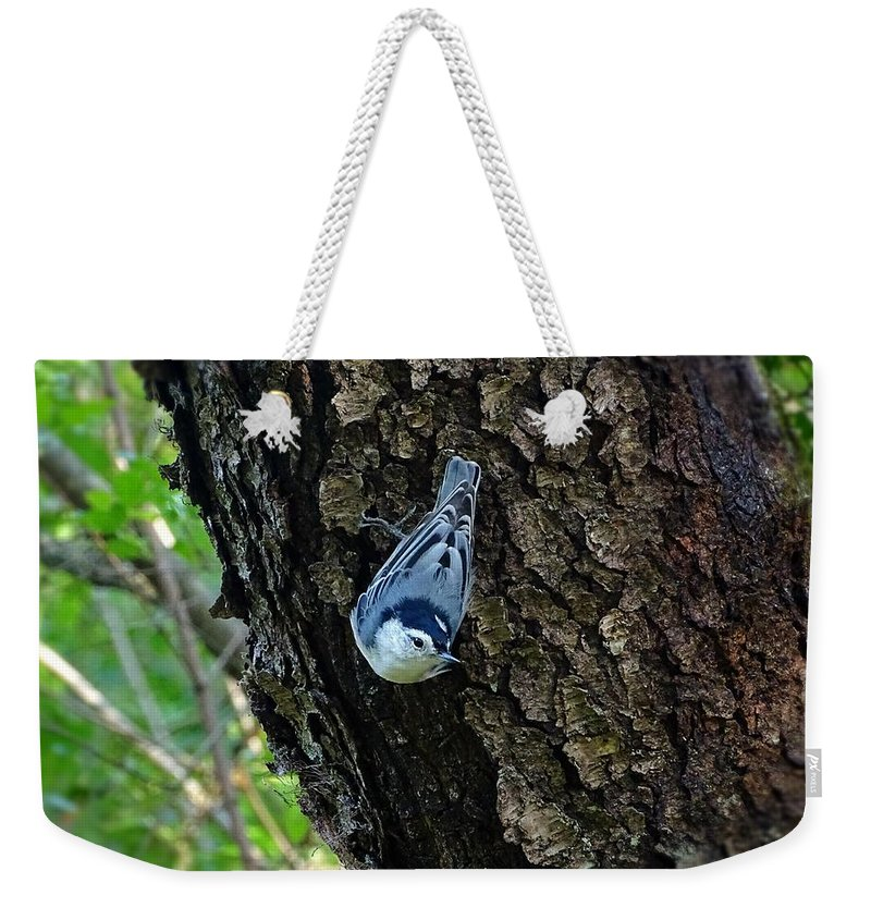 Bird Weekender Tote Bag featuring the photograph Blue Bird 1 by Lilia D