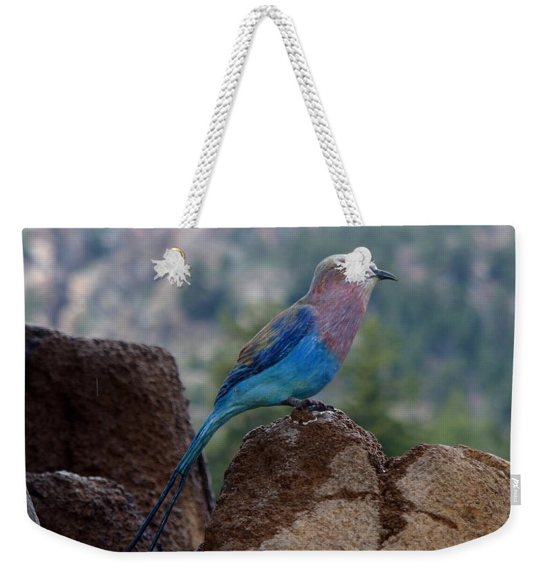 Bird Weekender Tote Bag featuring the photograph Blue Bird by Anthony Jones