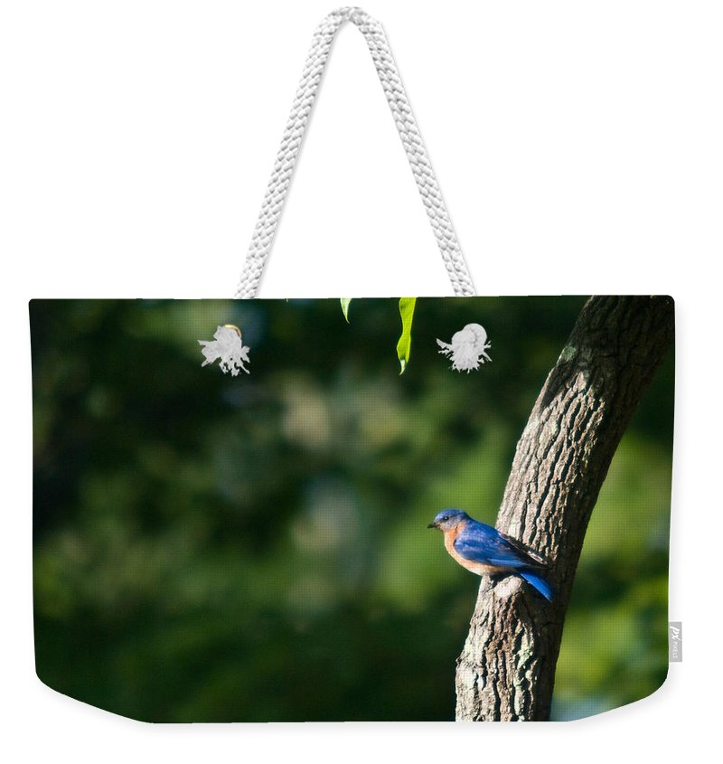 Blue Weekender Tote Bag featuring the photograph Blue Bird Perched by Douglas Barnett