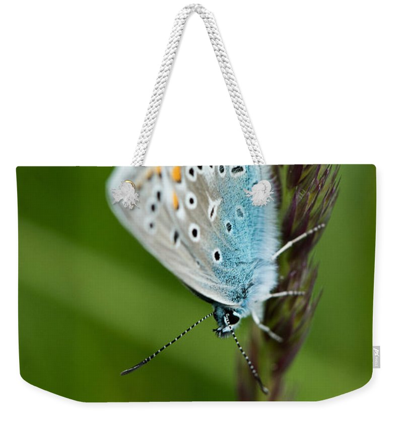 Butterfly Weekender Tote Bag featuring the photograph Blue Butterfly On Grass by Brothers Beerens