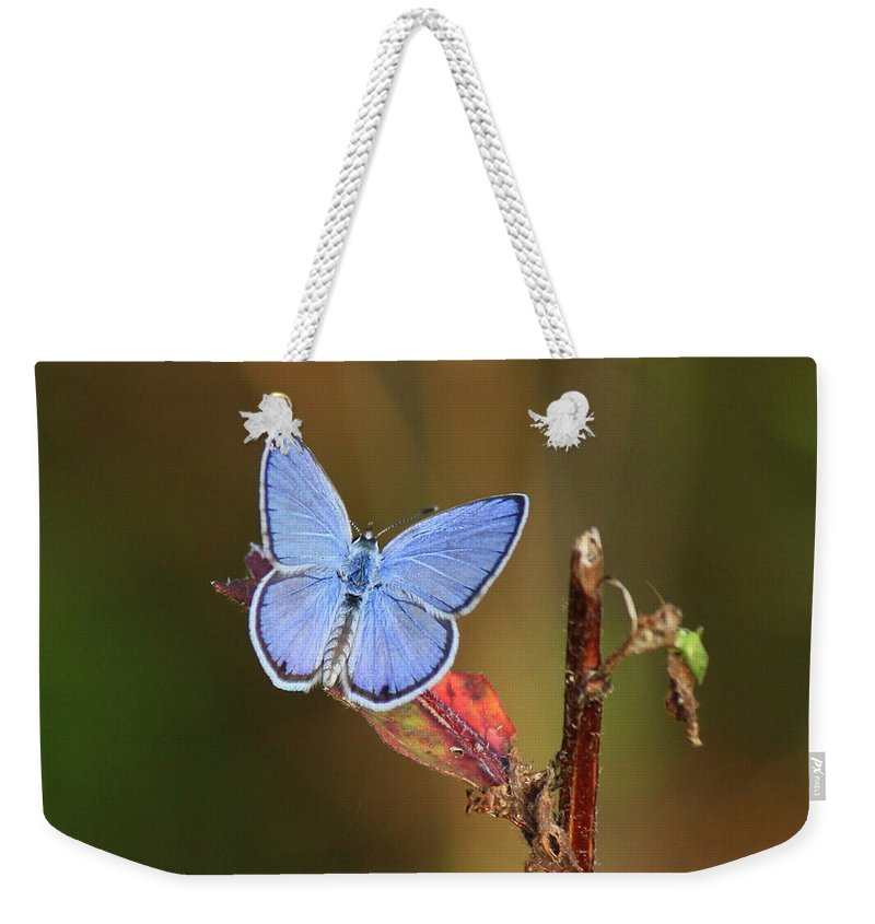 Blue Butterflies Weekender Tote Bag featuring the photograph Blue Butterfly On Leaf by Carol Groenen