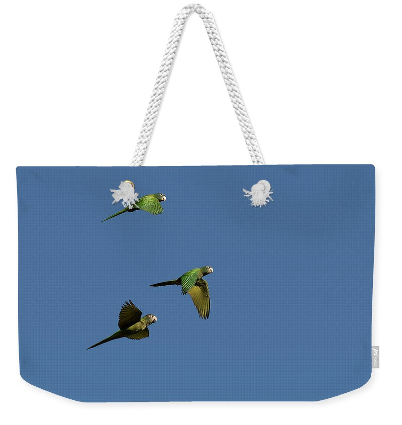 Blue-crowned Parakeet Weekender Tote Bag featuring the photograph Blue-crowned Parakeets In Flight by Pablo Rodriguez Merkel