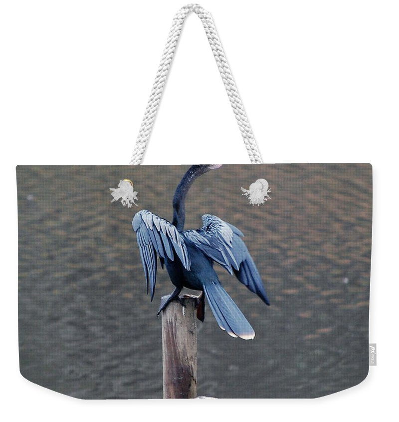 Bird Weekender Tote Bag featuring the photograph Blue Darter by Robert Meanor