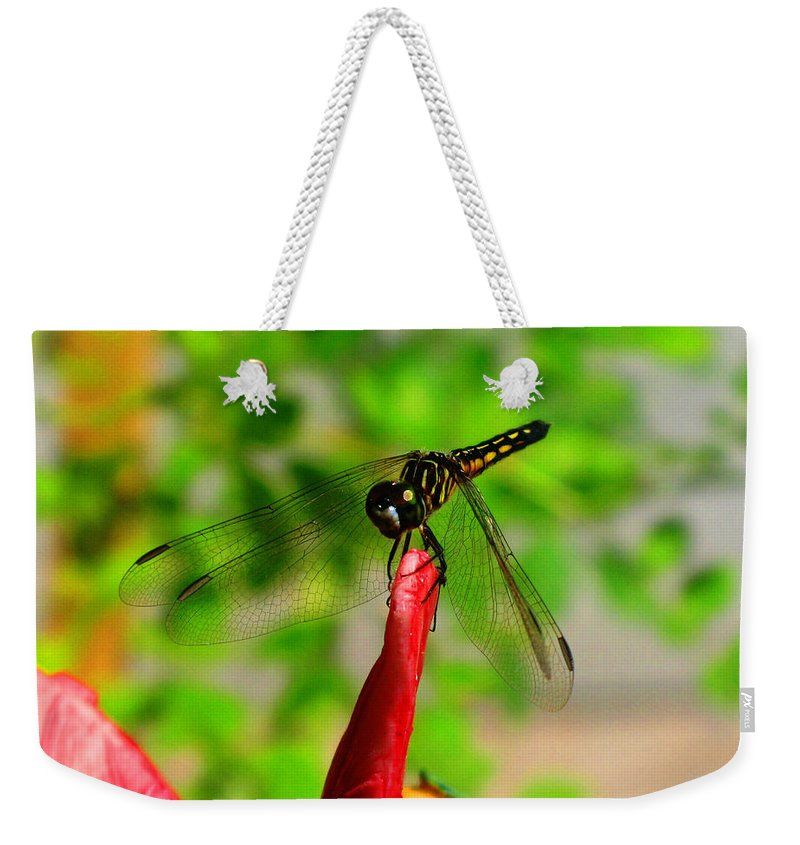Damselfly Weekender Tote Bag featuring the photograph Blue Dasher Damselfly by September Stone