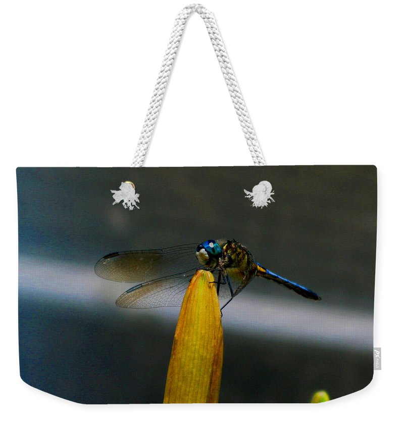 Dragonfly Weekender Tote Bag featuring the photograph Blue Dhasher Dragonfly by September Stone