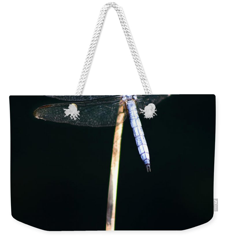 Dragonfly Weekender Tote Bag featuring the photograph Blue Dragon On Stem by Chris Brannen