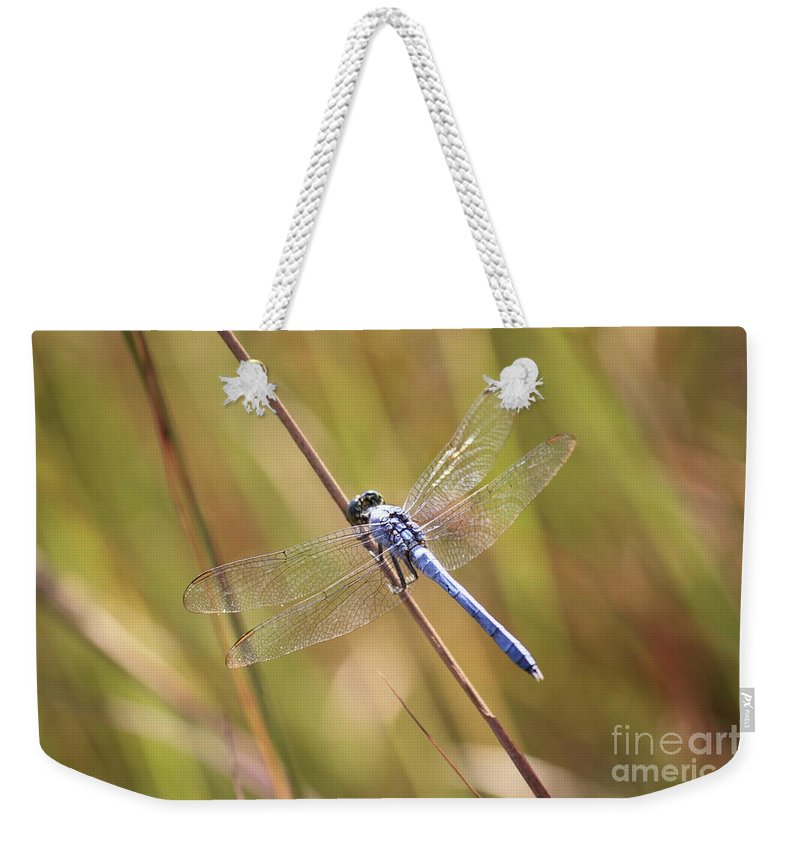 Dragonfly Weekender Tote Bag featuring the photograph Blue Dragonfly Against Green Grass by Carol Groenen