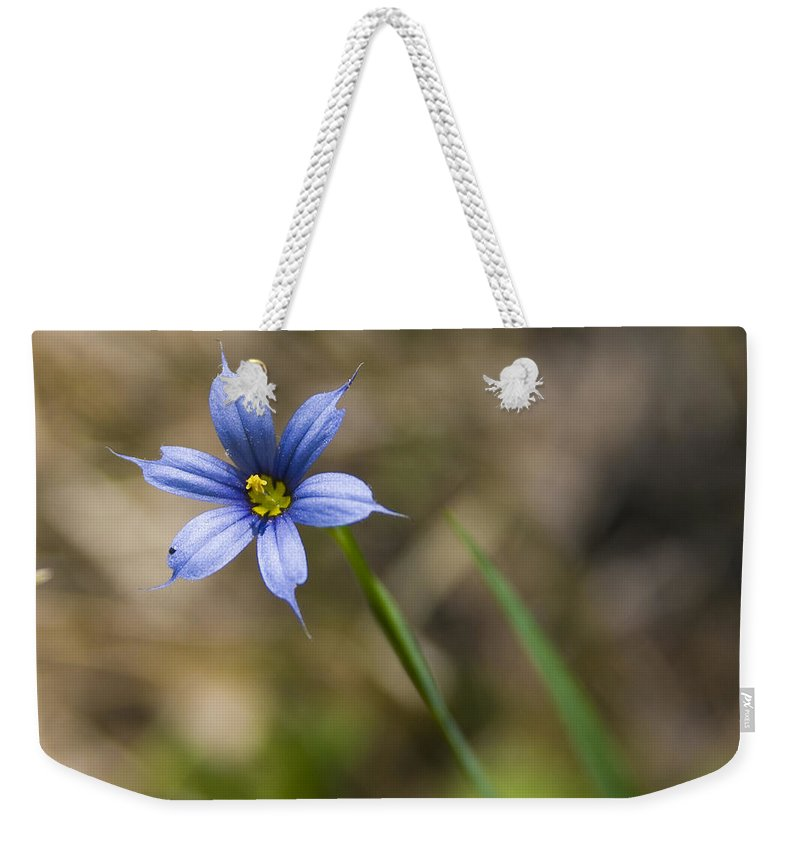Flower Blue Grass Green Small Little Bright Color Colorful Yellow Flora Nature Weekender Tote Bag featuring the photograph Blue-eyed Grass II by Andrei Shliakhau
