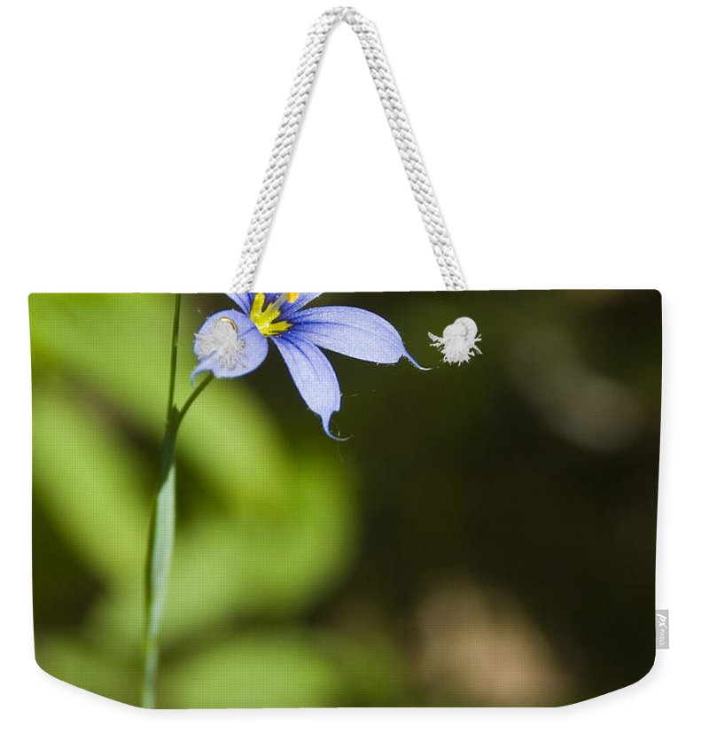 Blue Eye Grass Flower Nature Yellow Green Delicate Small Little Weekender Tote Bag featuring the photograph Blue-eyed Grass IIi by Andrei Shliakhau