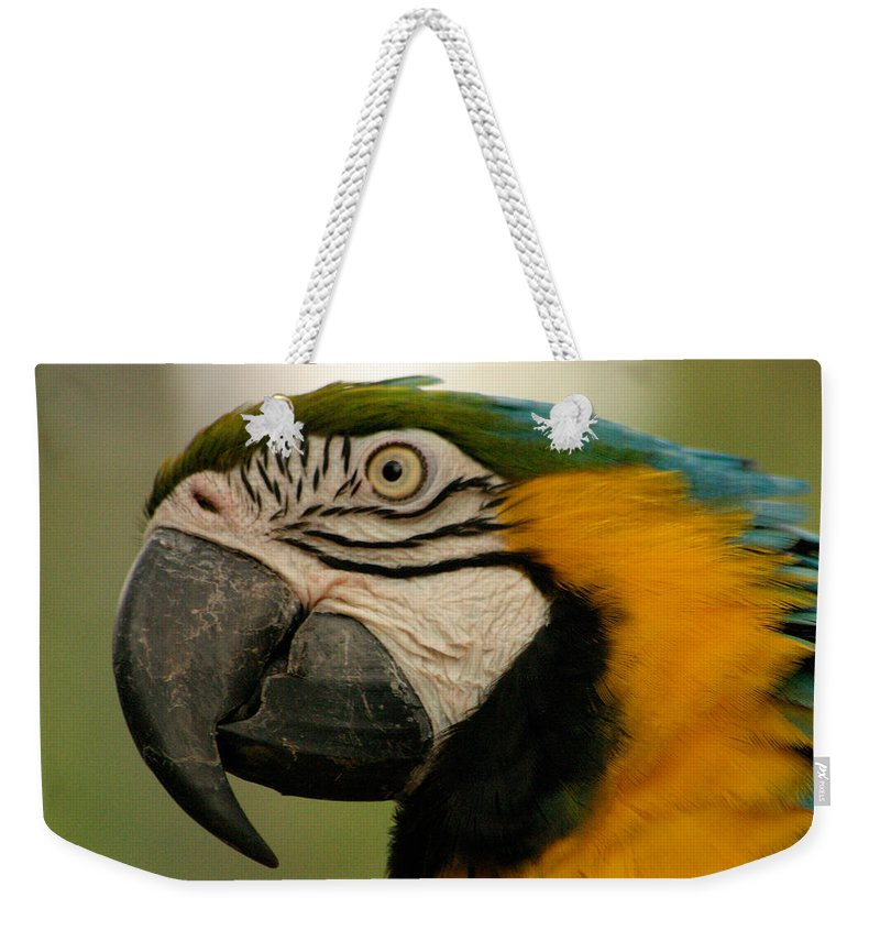 Parrot Weekender Tote Bag featuring the photograph Blue Gold Macaw South America by Ralph A Ledergerber-Photography