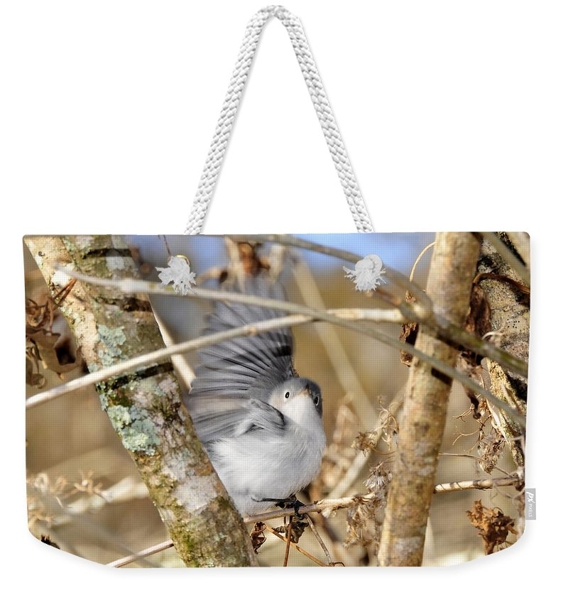 Warbler Weekender Tote Bag featuring the photograph Blue Gray Gnatcatcher by David Lee Thompson
