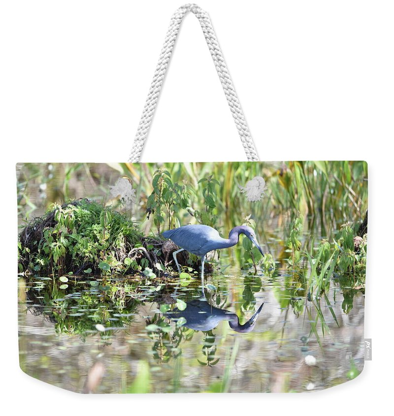 Blue Heron Weekender Tote Bag featuring the photograph Blue Heron Fishing In A Pond In Bright Daylight by Artful Imagery