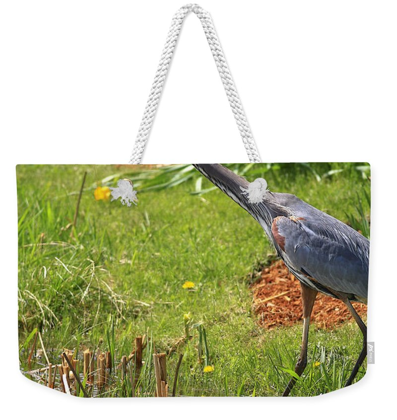 Bird Weekender Tote Bag featuring the photograph Blue Heron Scene by Deborah Benoit