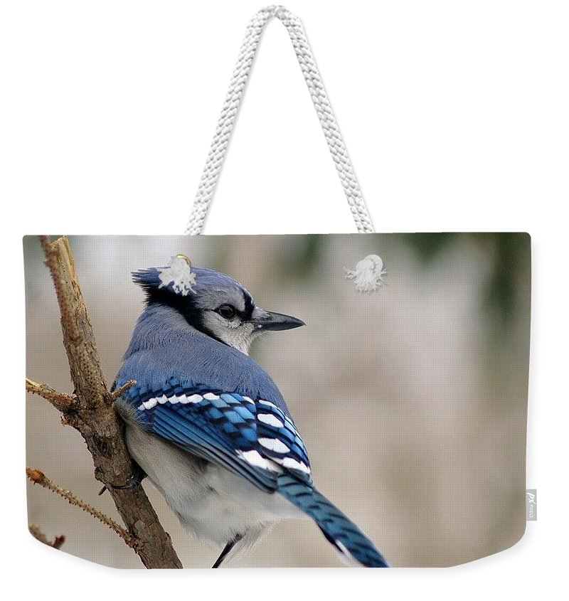 Blue Jay Weekender Tote Bag featuring the photograph Blue Jay by Gaby Swanson
