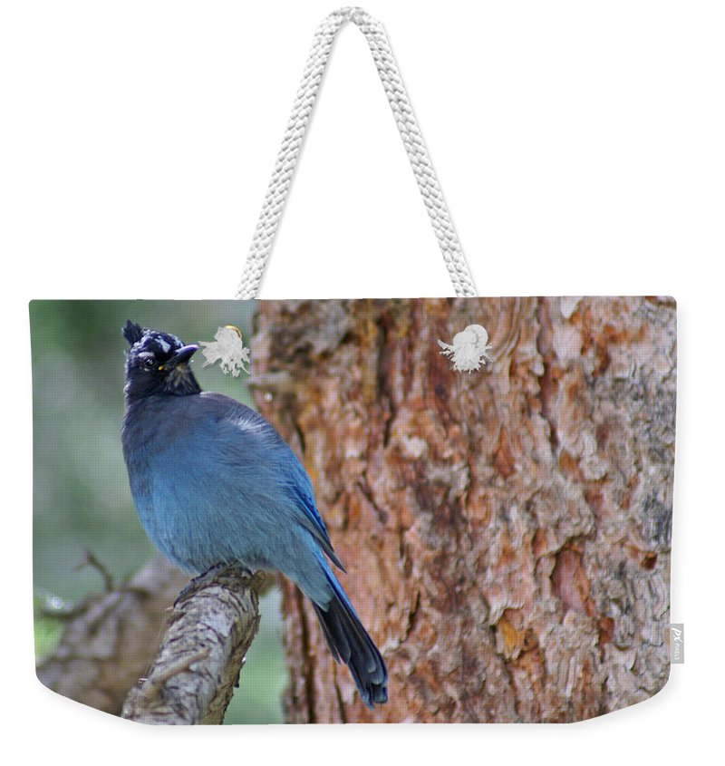Blue Jay Weekender Tote Bag featuring the photograph Blue Jay by Heather Coen