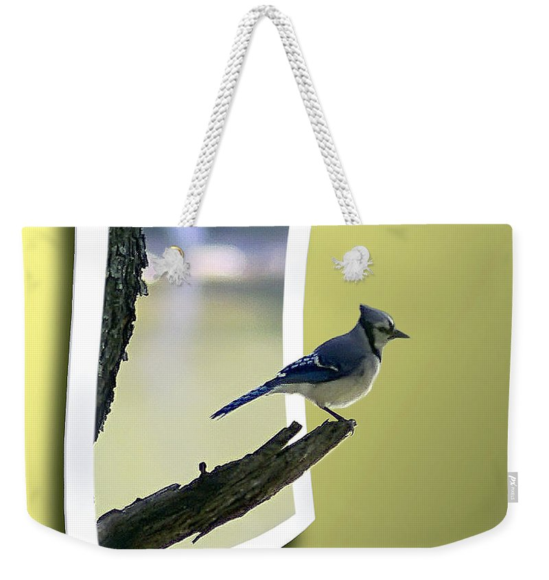 2d Weekender Tote Bag featuring the photograph Blue Jay Perched by Brian Wallace