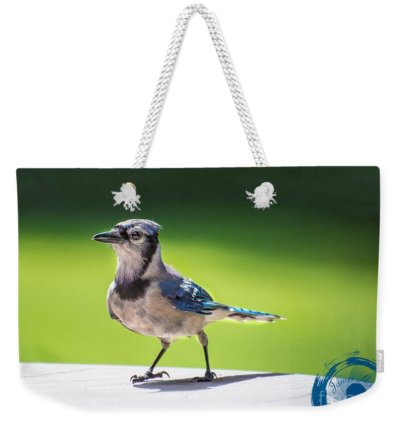 Blue Jay Weekender Tote Bag featuring the photograph Blue Jay Walk by James Hennis