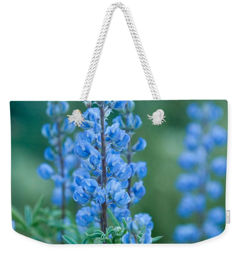Grand Teton Weekender Tote Bag featuring the photograph Blue Lupine In The Tetons by Sandra Bronstein