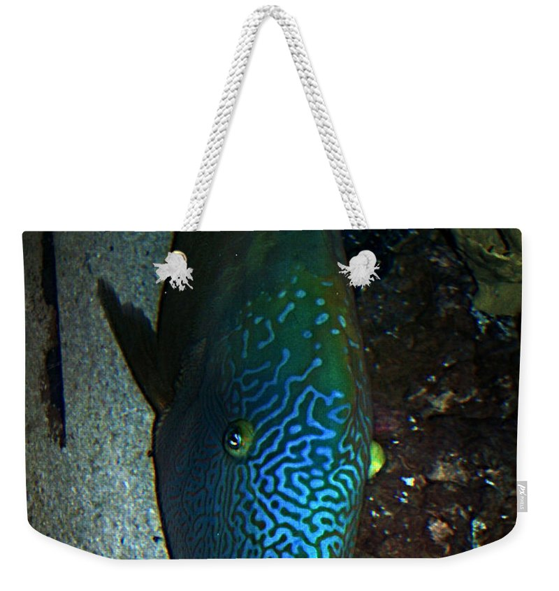 Fish Weekender Tote Bag featuring the photograph Blue Parrot Fish by Anthony Jones