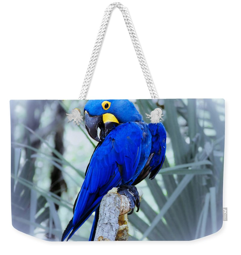 Brevard Zoo Weekender Tote Bag featuring the photograph Blue Parrot by Roger Wedegis