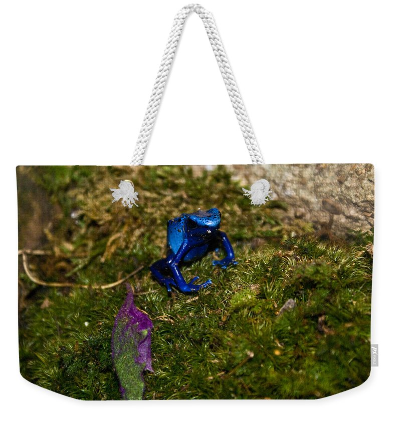 Blue Weekender Tote Bag featuring the photograph Blue Poison Arrow Frog by Douglas Barnett