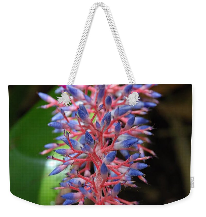 Red Weekender Tote Bag featuring the photograph Blue Red Plant by Rob Hans
