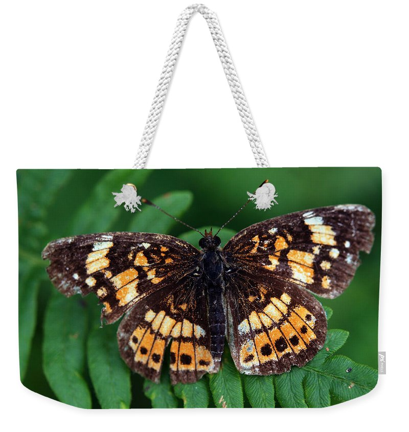 Creature Weekender Tote Bag featuring the photograph Blue Ridge Butterfly by Kay Lovingood