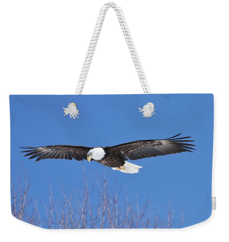 Bald Eagle Weekender Tote Bag featuring the photograph Blue Sky Glide by Teresa McGill
