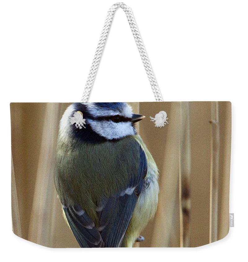 Blue Tit Weekender Tote Bag featuring the photograph Blue Tit On Reed by Bob Kemp