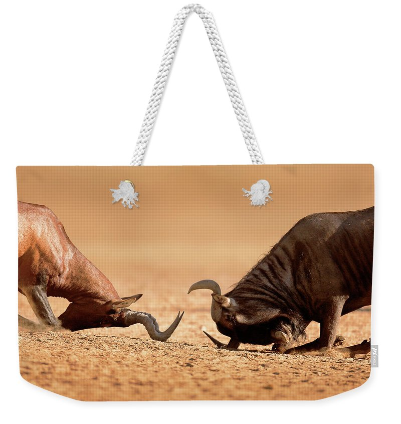 Wildebeest Weekender Tote Bag featuring the photograph Blue Wildebeest Sparring With Red Hartebeest by Johan Swanepoel