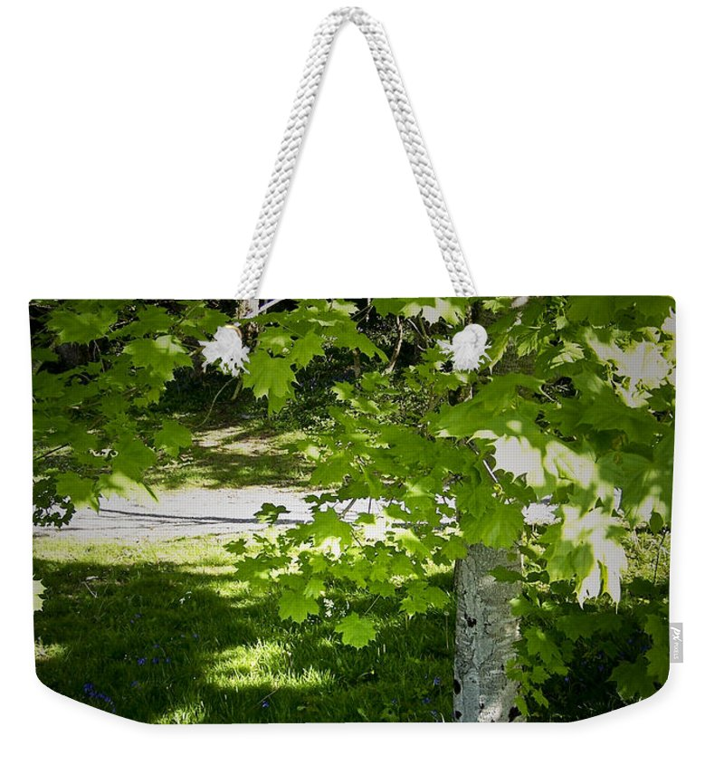 Irish Weekender Tote Bag featuring the photograph Bluebells In Killarney National Park Ireland by Teresa Mucha