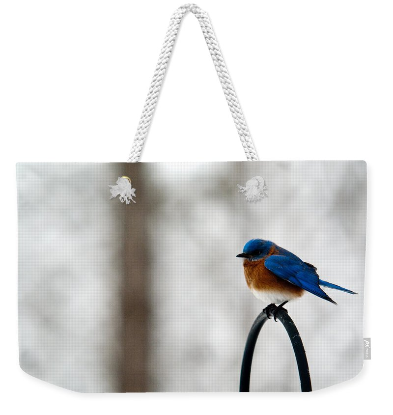 Bluebird Weekender Tote Bag featuring the photograph Bluebird Fluffed by Douglas Barnett