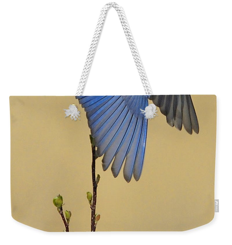 Bluebird Weekender Tote Bag featuring the photograph Bluebird Takes Flight by William Jobes