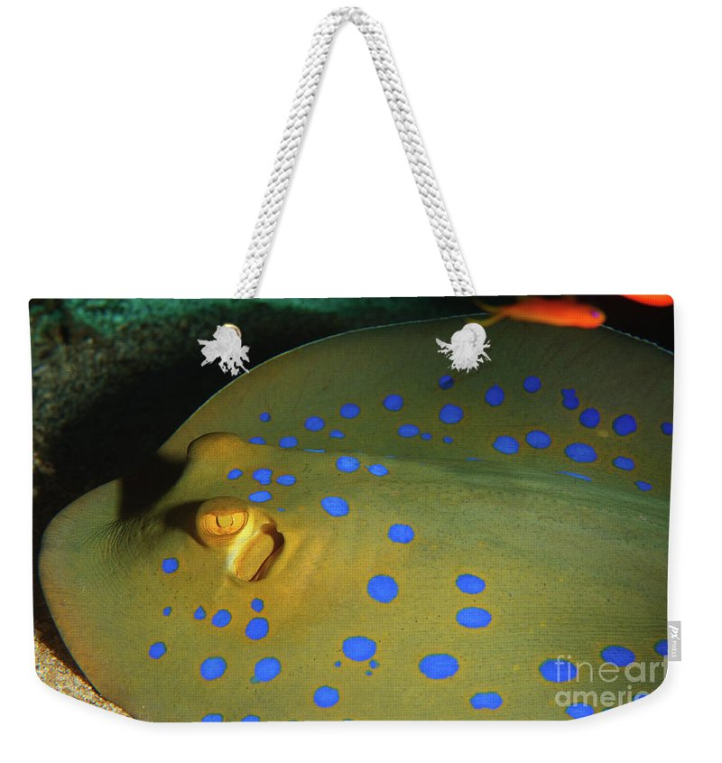 Underwater Weekender Tote Bag featuring the photograph Bluespotted Ribbontail Ray by Hagai Nativ