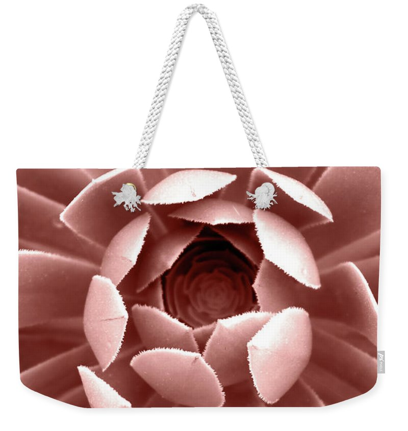 Cactus Weekender Tote Bag featuring the photograph Blush Pink Succulent Plant, Cactus Close Up by PrintsProject