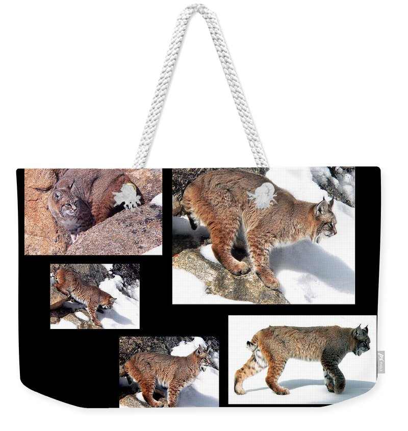 Bob Cat Weekender Tote Bag featuring the photograph Bob Cat by Mark Ivins