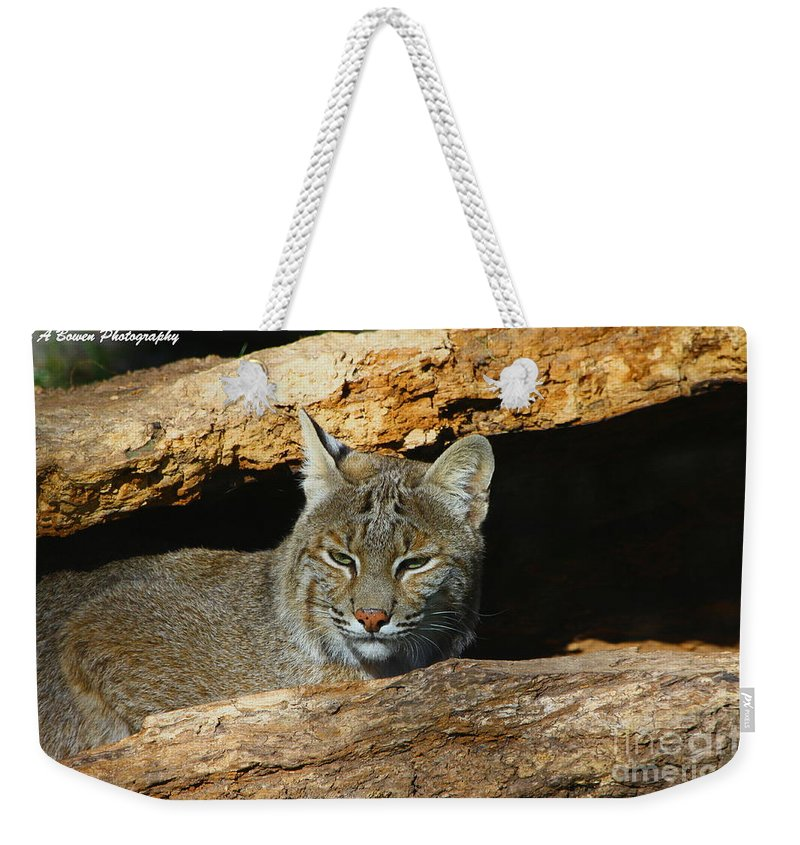 Bobcat Weekender Tote Bag featuring the photograph Bobcat Hiding In A Log by Barbara Bowen